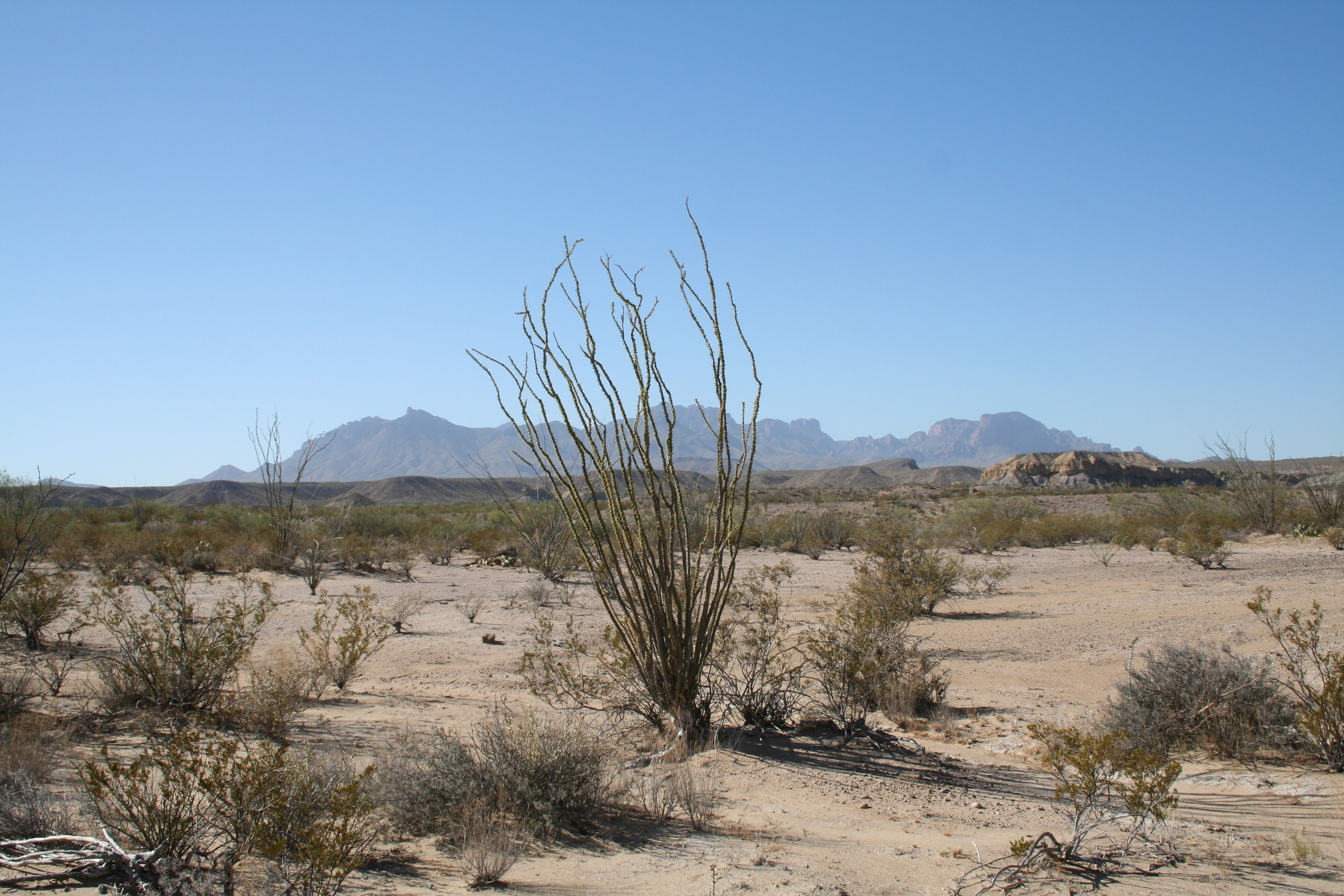 In balia del deserto (di Sebastiano Golinelli e Rocco Pirrone)